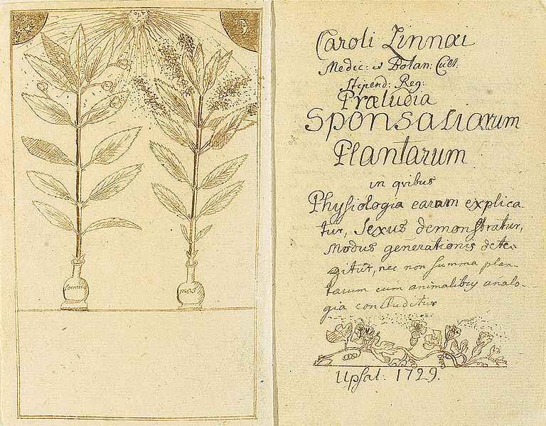 Рукопись работы Линнея Praeludia sponsaliorum
