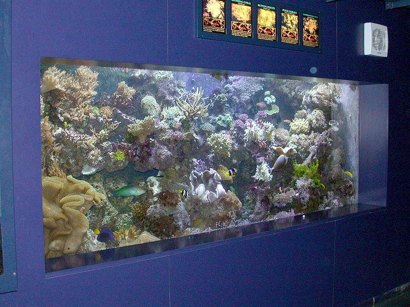 800px-Reef_aquarium