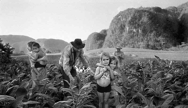 800px-MRO_Cuba_Harvest_01
