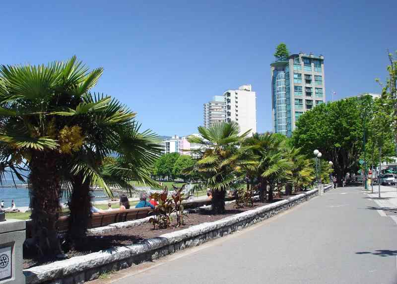 Vancouverpalms