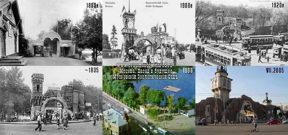 история московского зоопарка 7483