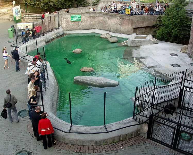 749px-Sea_lions_pool_(Moscow_Zoo)